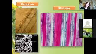 Растительные ткани Разбор