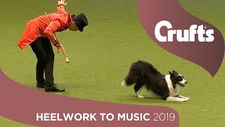 The Greatest Chowman! Epic Heelwork To Music Performance | Crufts 2019