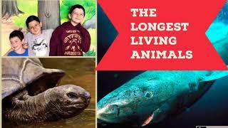 #7 THE LONGEST LIVING ANIMALS