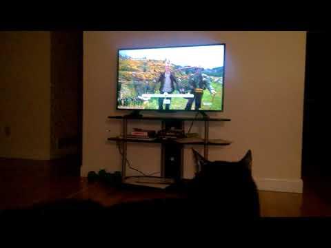 Seductive Cat watching the Amazing Race thumbnail