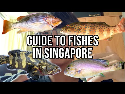 A Guide To Common Fishes In Singapore! (Part 1)