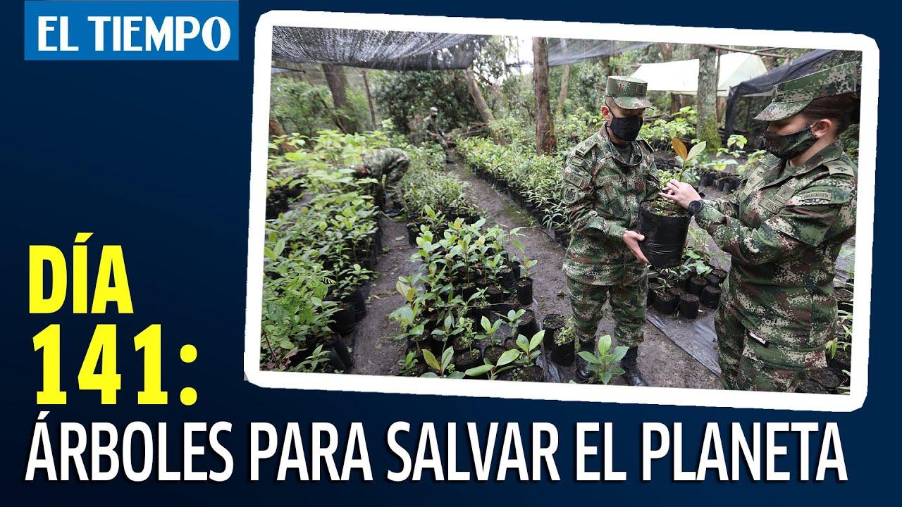 Árboles para salvar el planeta