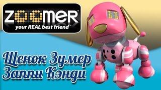 Интерактивная собака робот зуммер -Zoomer Zuppies Заппи Кэнди