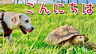 みみちゃん、念願のドッグランデビューを果たしました!! が、まさかの...