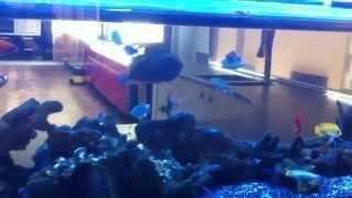 2.6m Marine Display Aquarium As Room Divider @ Bks Kitchen Showroom