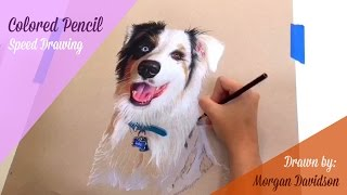 Colored Pencil Dog Drawing Time-lapse