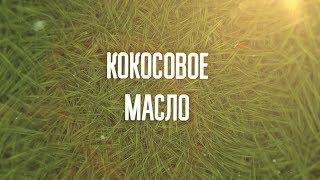 видео Польза масла кокоса