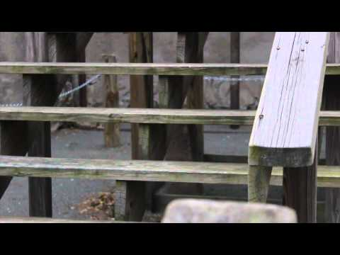 Behind the Bars: Mount Holly Prison Documentary