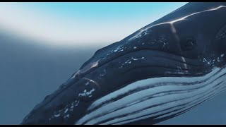 3D Humpback Whale with Underwater Caustics