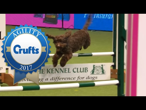 Agility - Small Team Final - Part 1/3 | Crufts 2017