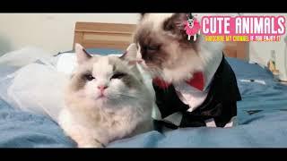 【Cute Animals】Cute baby animals Videos -4