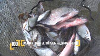 Осенняя ловля белой рыбы на диком Днепре. Авторский Видео блог '100 рыбалок'. 2 серия
