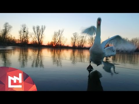 Drone accident with swans