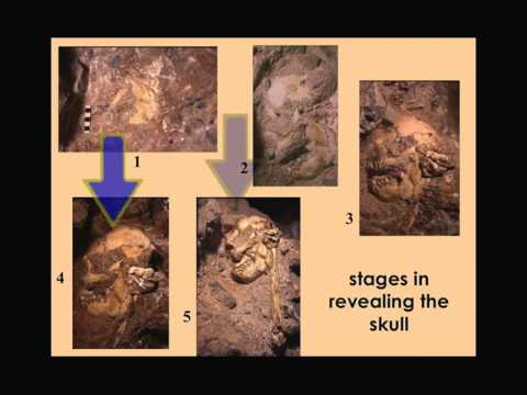 "CARTA: Early Hominids: Ronald Clarke - ""Little Foot"", Big Find - A Skeleton of Australopithecus"