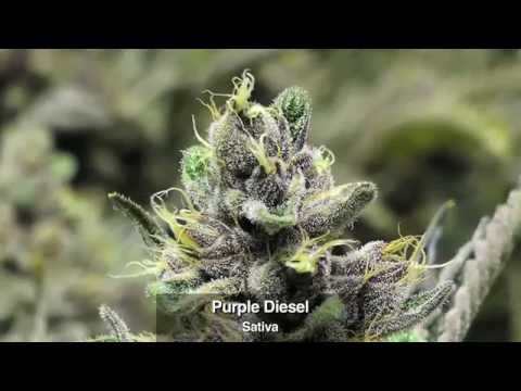Marijuana Strains (Selection from Flower Power Botanicals) - In A Colorado Minute (Week 257)