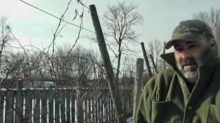 Grape Trellis Planting Scheme - Permaculture Design+