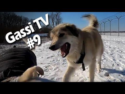 Gassi TV #09 - Lernen loszulassen
