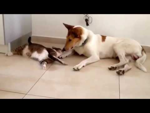 Extreme cuteness - Cat & Dog love story