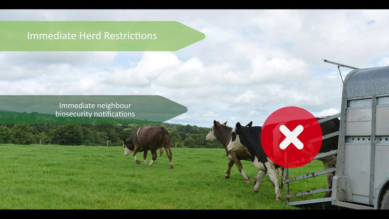 National BVD Eradication Programme Key Messages 2021