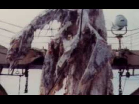3 More Sea Monster Carcasses and Their Explanations