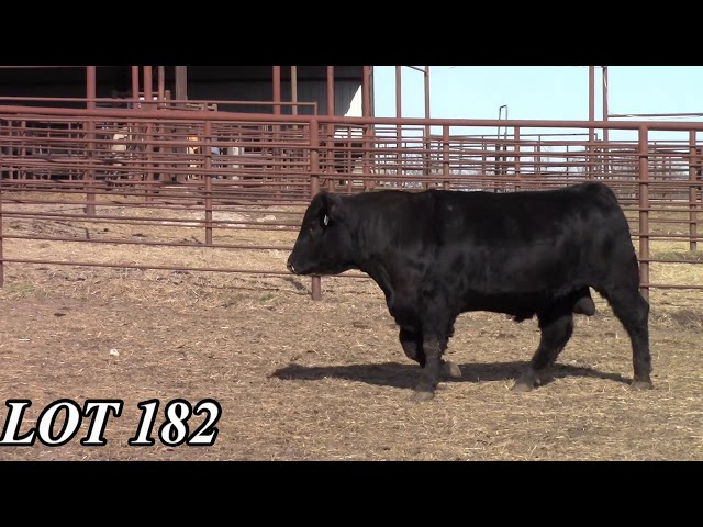 Mead Angus Farms Lot 182