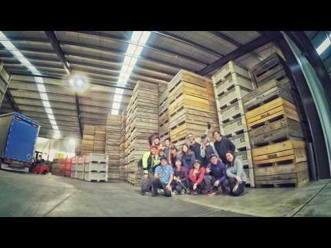 紐西蘭working-holiday【nzwhv】-之奇異果-pack-house