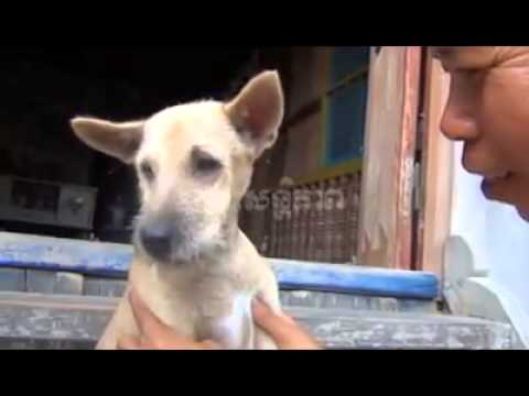 Cambodia talking dog!!!