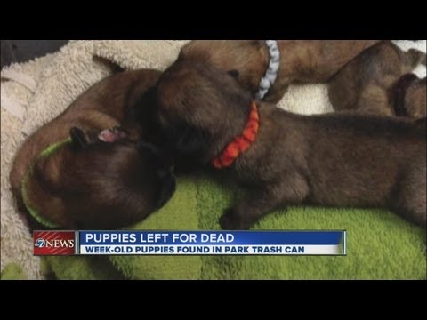 Newborn puppies dumped in trash can at Highlands Ranch park