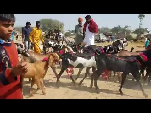 Bhatinda Bakra Mandi Walking Tour