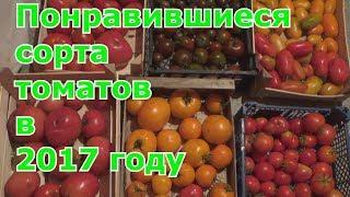 Сорта томатов, которые оставлю на следующий год