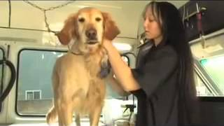 Aussie Pet Mobile: Amazing Mobile Grooming For Cats And Dogs!