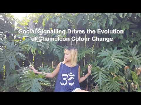 Selection for Social Signalling Drives the Evolution of Chameleon Colour Change