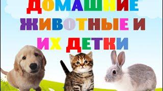 Домашние животные. Семья. Детёныши домашних животных. Развивающее видео для детей