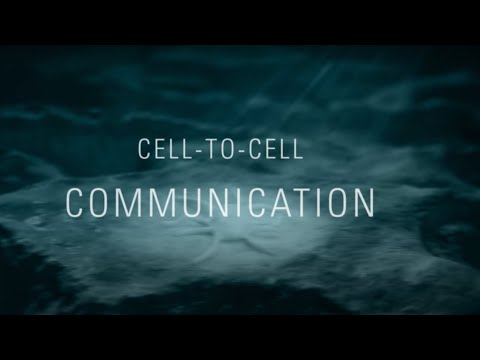 """""""Cell-to-Cell Communication"""" Film"""