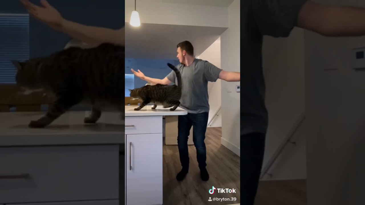 Proof that cats always land on their feet, you're welcome.