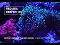 Red Sea Reefer 170 Recap Before The Big Move!