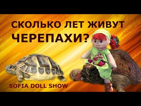 Детям о черепахах. Сколько лет живут черепахи? Путешествуйте с Софией!