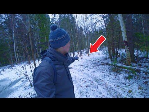 Встретил в лесу