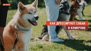 Как дрессируют собак в Кемерове / VSE42.RU