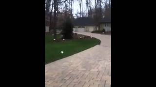 Maryland Dog Training   Invisible Fence Dog Training In Potomac Maryland