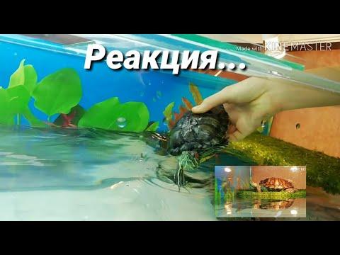 Первая реакция красноухих черепах на аквариум 270л!!!