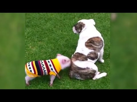 You'll LAUGH ate every single FUNNY ANIMAL VIDEO! - Best of FUNNY & CUTE PET moments
