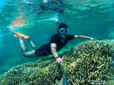 Snorkeling with Coral Reef Fish - Pigeon Island - Trincomalee