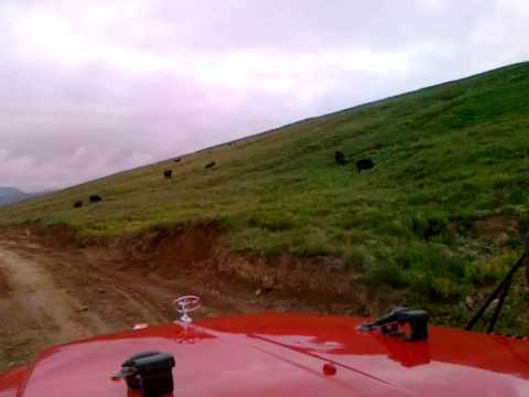 Deosai Plains, Pakistan-Part 02-The Yaks