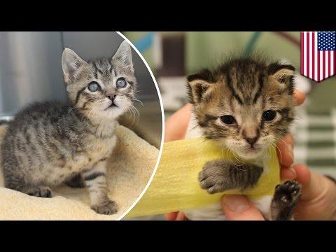 Cara Merawat Anak Kucing Tanpa Induk Doovi