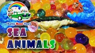 Sea Animals. Морские Животные.