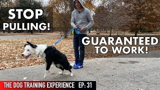 the-most-realistic-leash-dog-training-lesson-ever-stop-pulling
