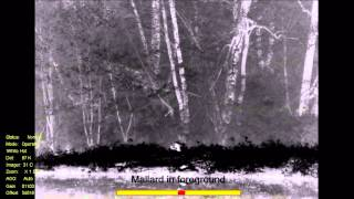 Wildlife in HD infrared