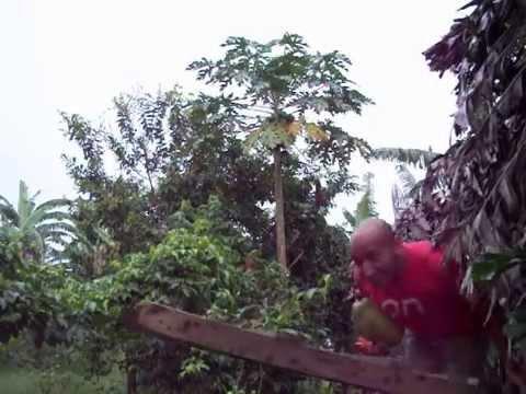 Costa Rican Size Papaya
