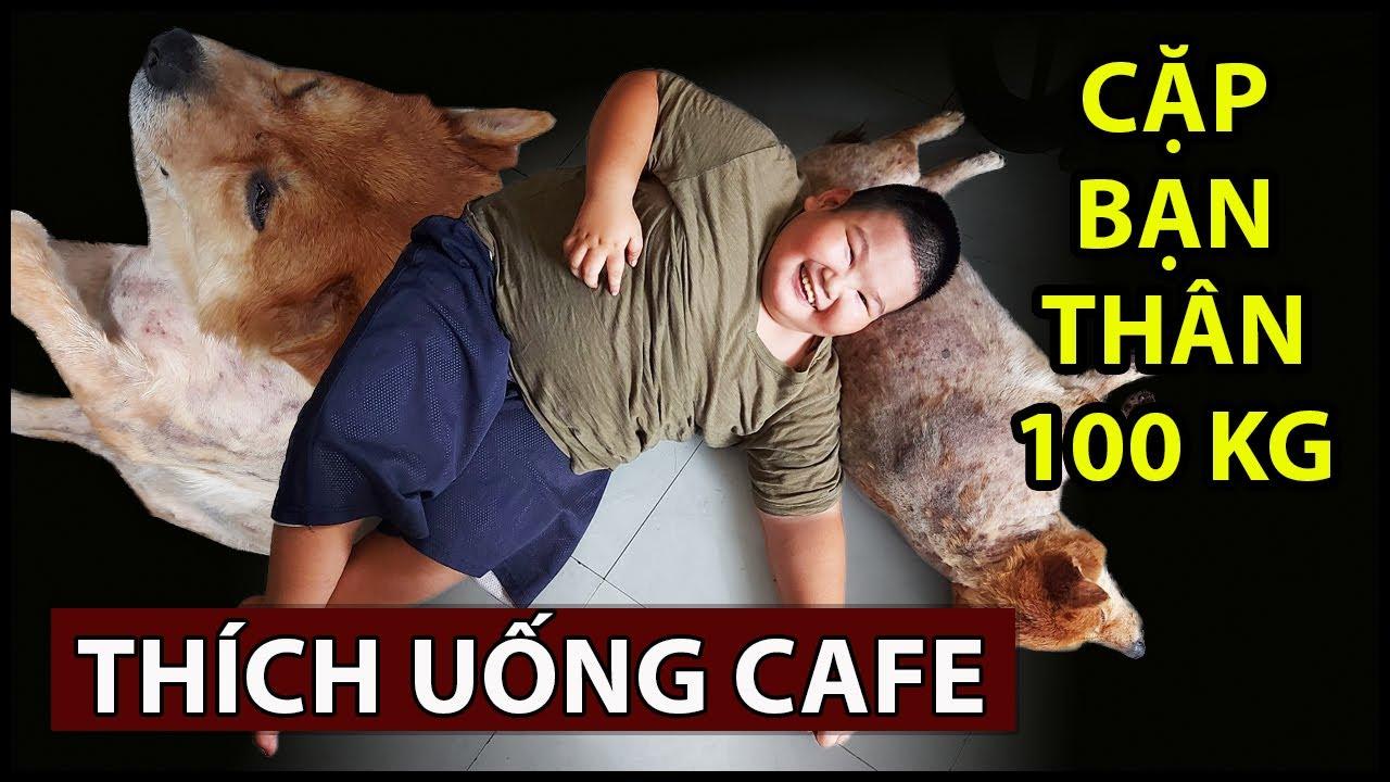 Chú chó cực khôn nặng 30kg làm bạn cậu bé 70kg, sáng nào cũng đòi uống cà phê   QUỐC CHIẾN Channel